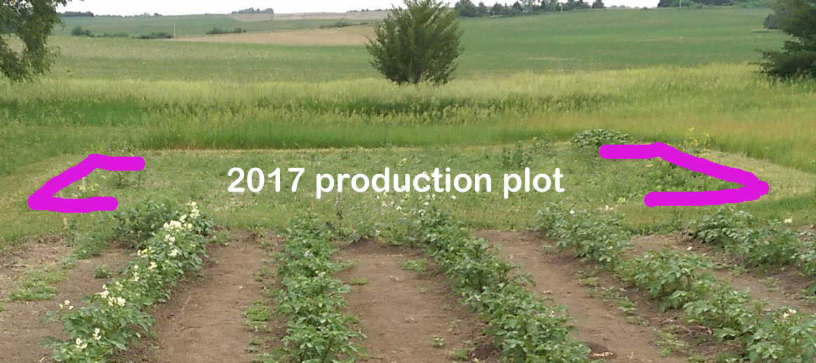 Image of potato plants and new production plot