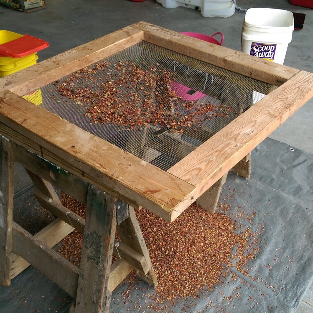 Picture of screen on sawhorses with tarp below and seed